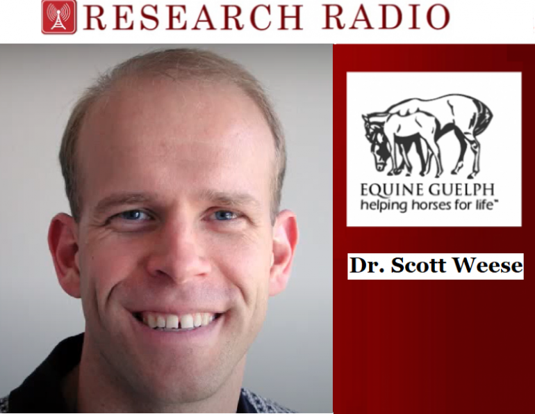 Dr. Scott Weese, Professor in Pathobiology at Ontario Veterinary College, horse gut function, health of horses nutrition, equine guelph research radio