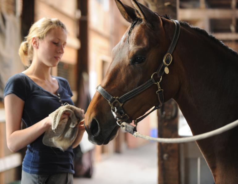 Regular horse care, every-day horse care, regular equine care, signs of equine lameness, horse hooves, horse legs, equine legs, horse tail, horse body condition, horse care, daily horse care