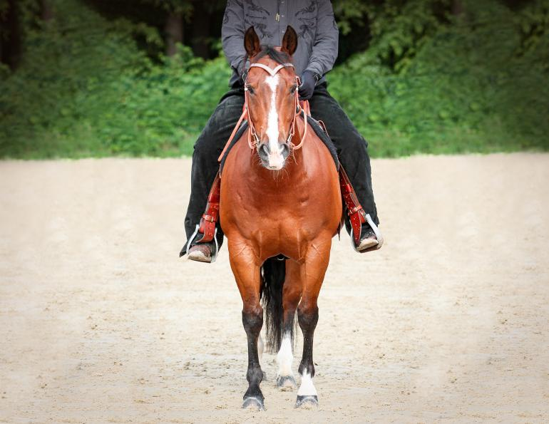 shelagh niblock equine nutritionist, does horse need vitamin b? nutritional yeast horse, b vitamins horse, older horse supplements