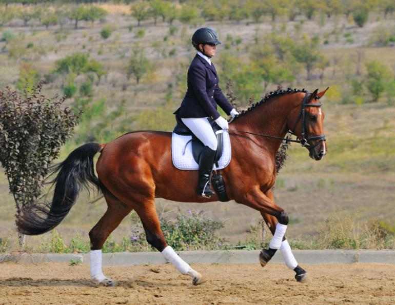 karen pavicic training riding forward dressage impulsion, power dressage fei trainer dressage engage hind