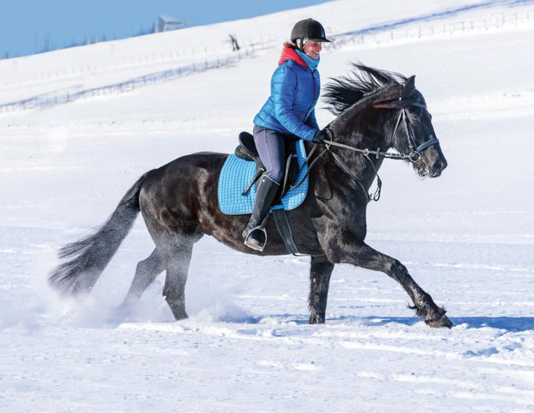how do i canter my horse, preparing a horse to canter, ways to canter, jec ballou horse training, types of equine gaits, benefits of cantering horse