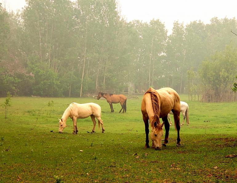 equine asthma, pollution horses, equine guelph studies asthma, horse airway problems