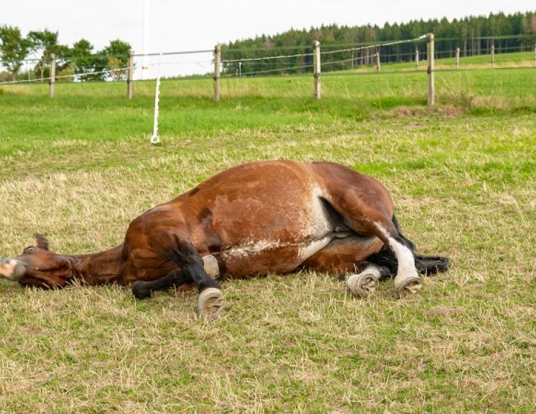 equine colic surgery, horse colic surgery, what happens after colic surgery