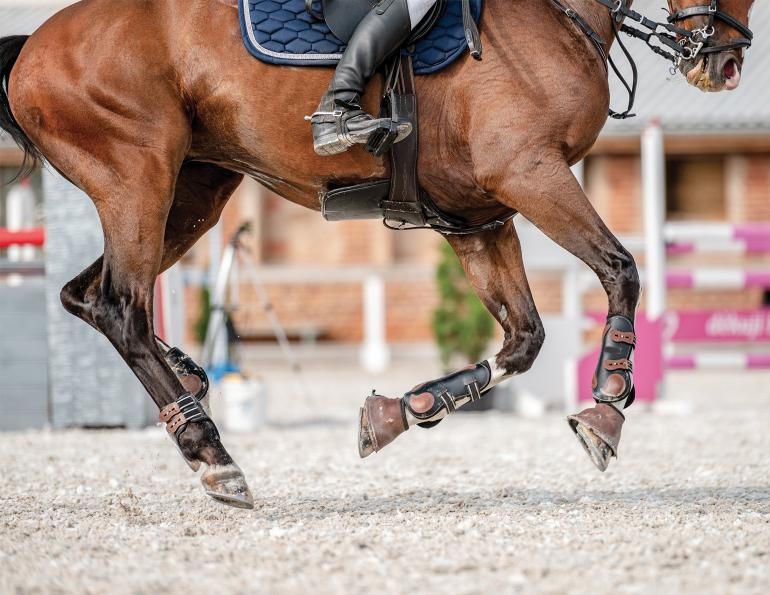 Hoof abscesses horses, equine White line disease (WLD), Laminitis horse, horse foot bruise, joint inflammation in horse, is my horse injured? equine ligamint injuries, common horse hoof problems, dr. william hodge