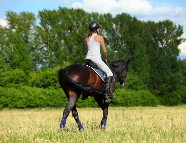overheating horse too hot summer riding heat