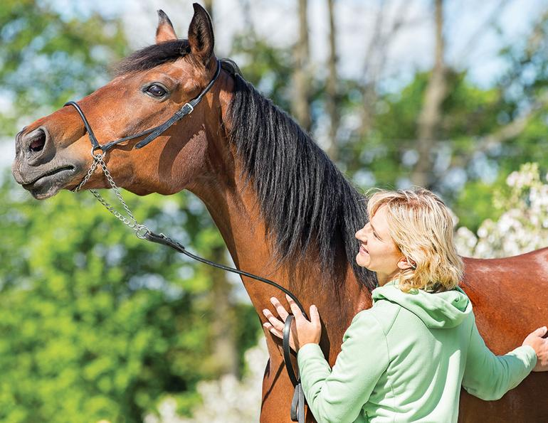 equine behaviour, e-barq, horse care psychology test, equine science update