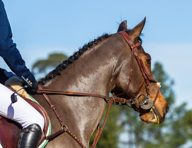 April Clay, prepare for horse show, nervous for horse show
