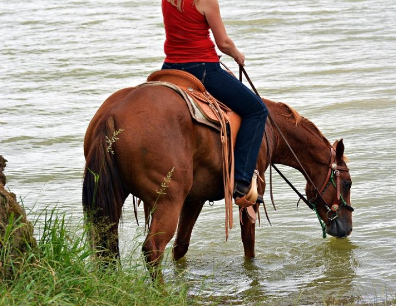 horse dehydration, equine sweating, horse overheating