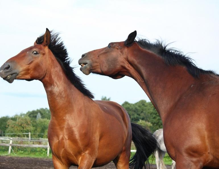 my horse is stressed out, equine stress horse, equine digestion stress, juliet m getty electrolytes horse, horse ulcers equine, changing horse's hay, changing horse's pasture, horse diet sensitivies equine diet