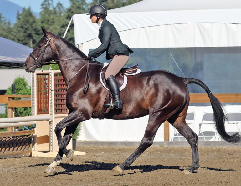 a horse rider's budget, are horses expensive? I can't afford my horse, how to pay for a horse