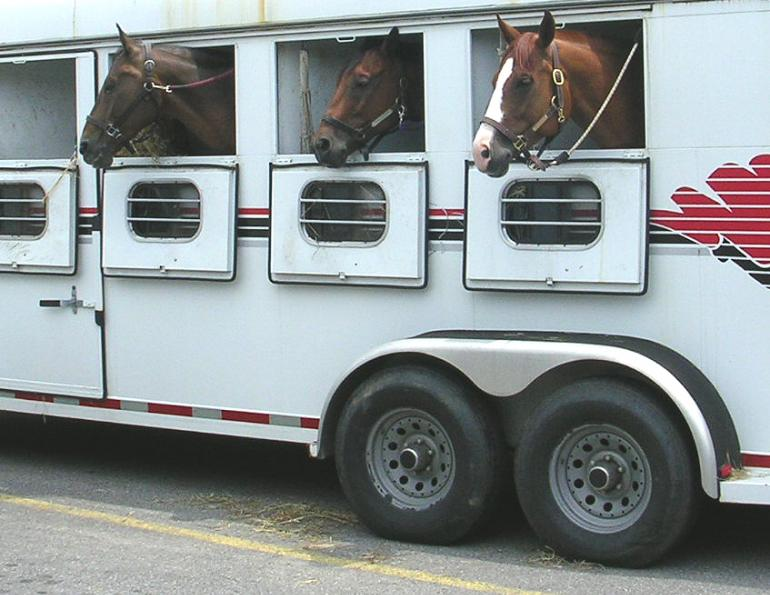 horse trailer accident liability