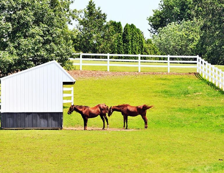 Horse Run-In Shed equine, horse shelter equine, horse property drainage