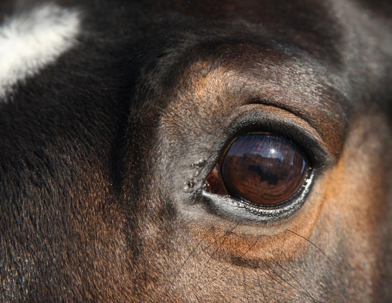 how does a horse show stress, university of guelph equine research, katrina merkies equine guelph