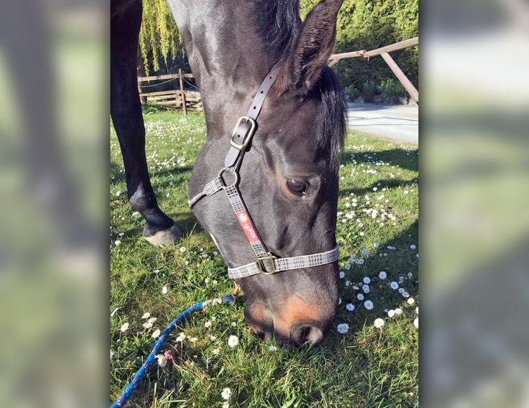 Waldhausen Lunging Aid, how to lunge a horse, best equipment for lunging horse, april ray, relatable rider blog