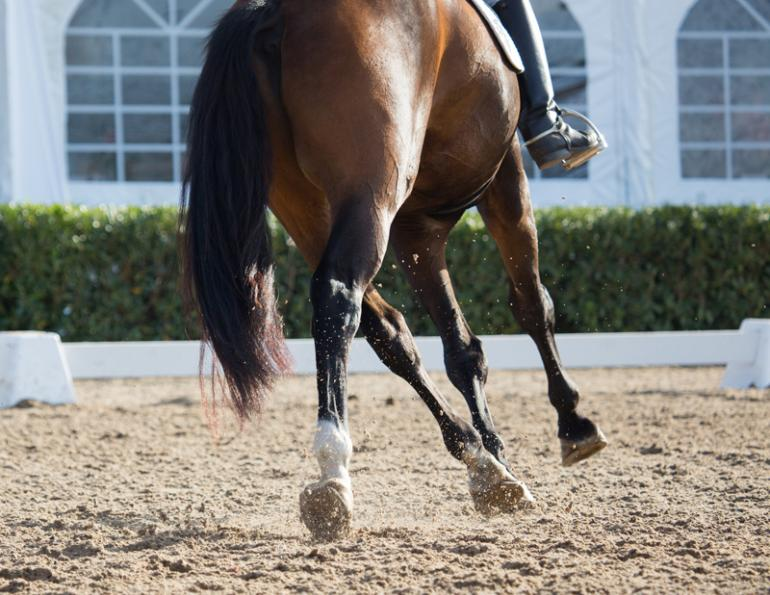 equine cross-training fitness, physical training dressage horse, Jec Ballou, horse trainer, jec aristotle ballou, western dressage, jec ballou, dressage exercises for horse and rider, jec ballou, equine fitness, beyond horse massage, Jec Ballou