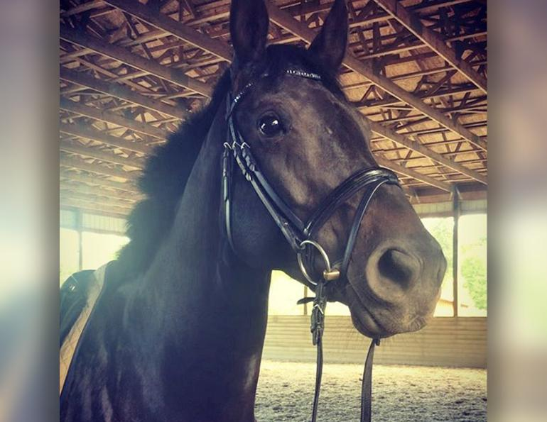 april d ray relatable rider, horse blogs, best horse blog, spooky horse