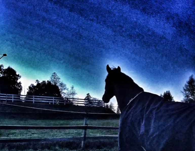 moving a horse to a new barn, april d. ray, how to help a spooking horse