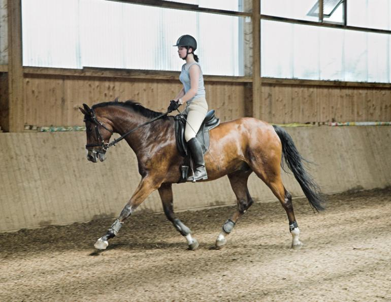 weight loss horse riding, horse rider weight loss tips, exercises for the horse rider, get fit for horse riding, exercise for the equestrian athlete, biorider fitness, bridget braden-olson