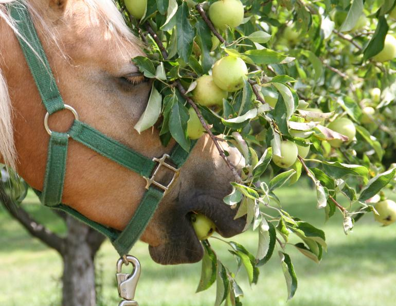 horse businesses covid-19, how to save money business coronavirus, blogs for horse businesses, equestrian professionals blog