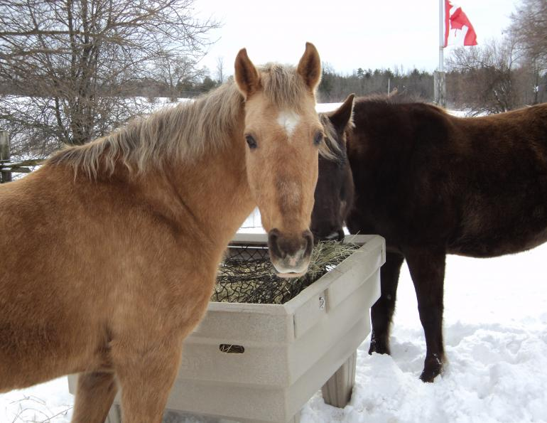 hay optimizer, feeding horses hay in winter, horse grazing summer, turnout for horses summer, horse winter turnout
