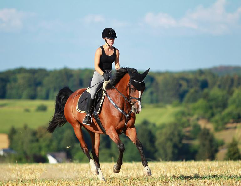 why is my horse lame, jec a ballou, injury horse, horse limping, tight horse reins, rein lameness