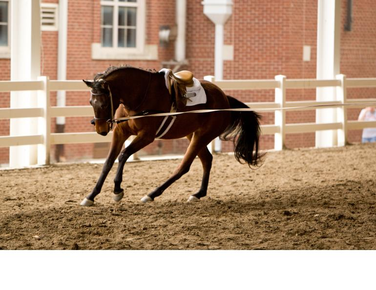 Lunging for Horse & Rider