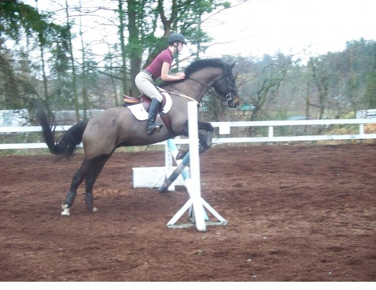 overcoming horse riding fear, fearful horse rider, understanding horse riding fear, horse rider physical fear, horse rider psychology