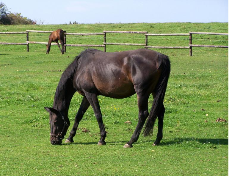 improve horse property, pasture fecal egg counts, rotational horse grazing, Harrow manure spread, horse pasture management, chewing horse fences, poisonous weeds horse pasture