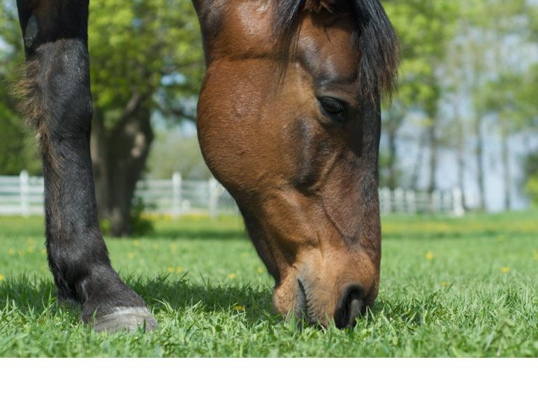 switching horse feed, transitioning horse feed, new horse hay, safely change horse hay, safely change horse feed