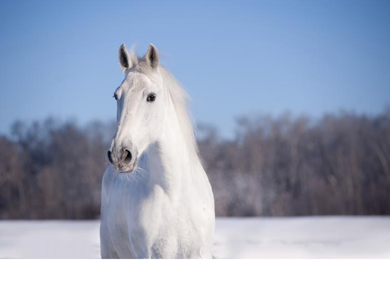 equine electrolytes, riding in the winter, wendy pearson, herbs for horses