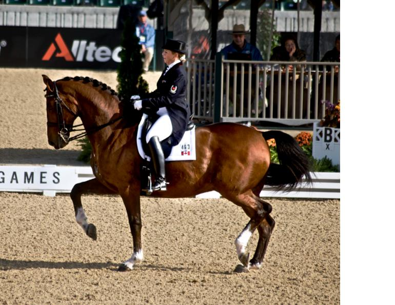 How to Prepare for Piaffe and Passage, Bonny Bonnello, dressage training pyramid apex, equine collection, equine lateral work, horse half-halt to decreased stride