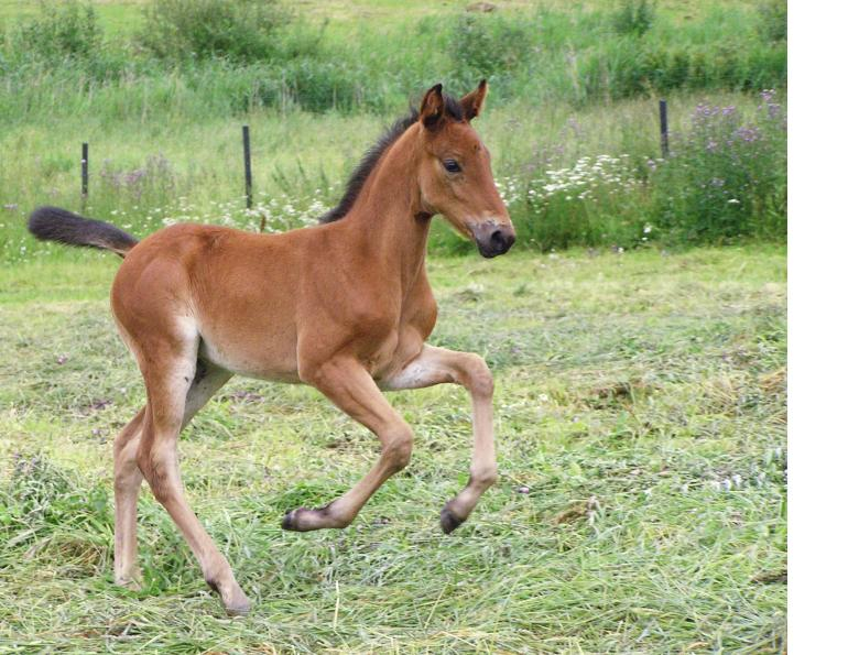 nursing foals, weaning a foal, foal nutrition, mare nutrition, feeding a foal, foal feeding, robin duncan, creep feeding, stall weaning, horse forage, horse hay