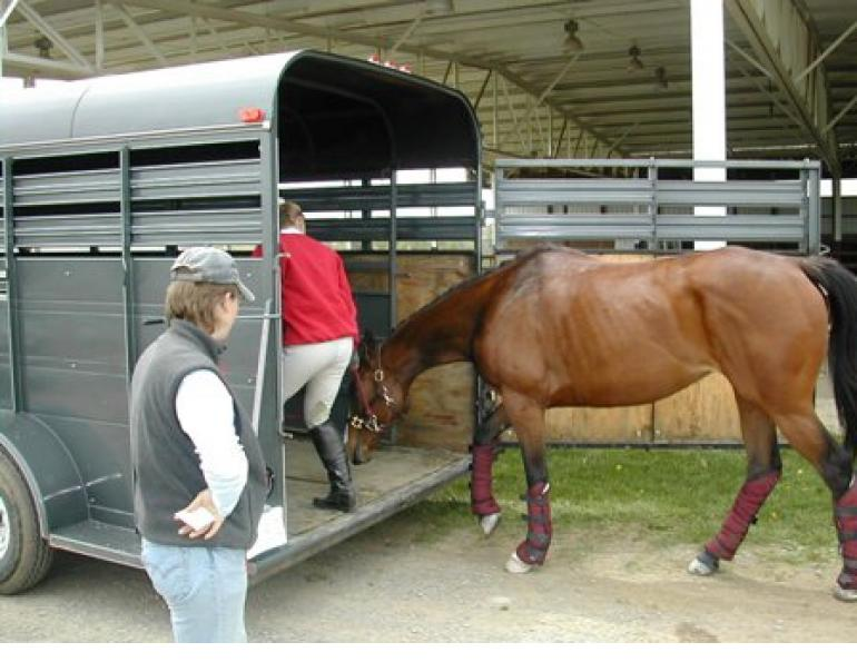 Horse Trailer Loading Troubles
