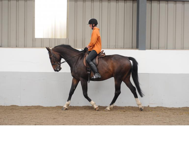 Trigger Points in Horses