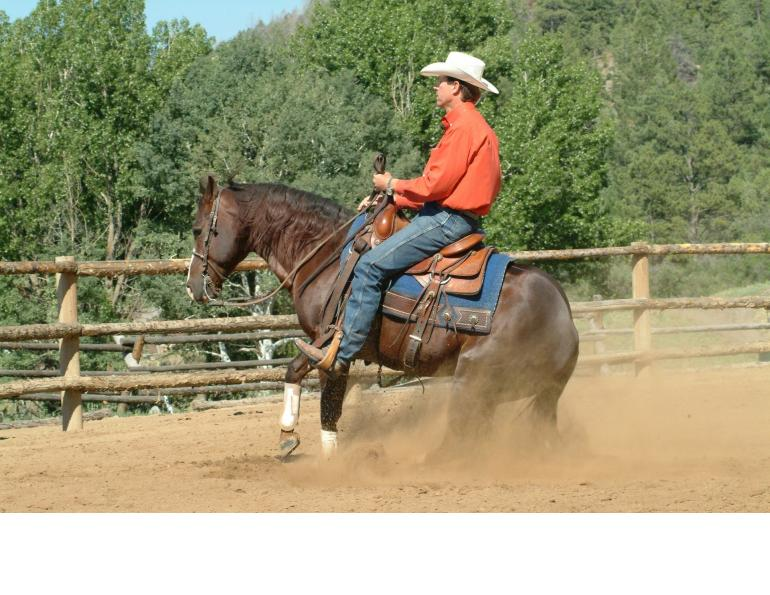 outgrowing your horse, finding perfect horse, Parelli Natural Horsemanship, Pat Parelli, horse buying tips, perfect equine partner