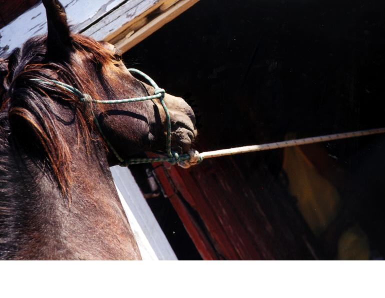 overcoming horses that pull when tied, how to de-stress your horse when tied, how to relax cross-tied horse, improve horse's coping skills when tied