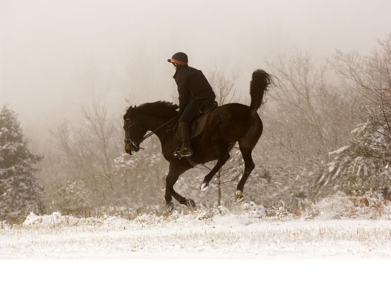 equine behaviour patterns, equine psychology, horse trainer Will Clinging