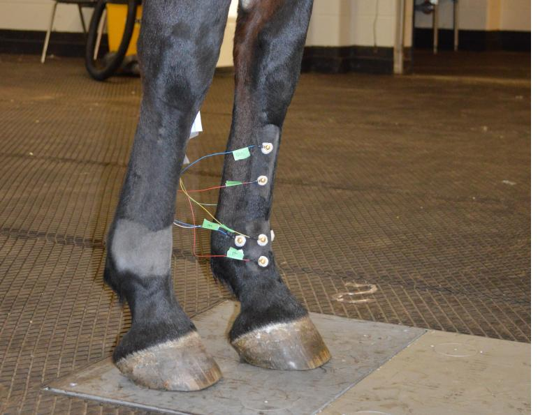 equine fetlock, fetlock injuries, equine lameness, electroarthrography, eag, mark hurtig, ontario veterinary college, equine guelph, university of guelph, Jackie Bellamy