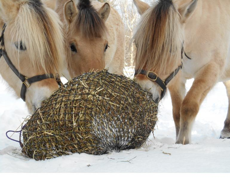 Juliet M. Getty, Ph.D., slow-feeding system, equine forage, foundation equine diet, ulcers, colic, behavioural issues, stall vices, gorging, choke, cribbing, laminitis, equine diet, alternative grazer