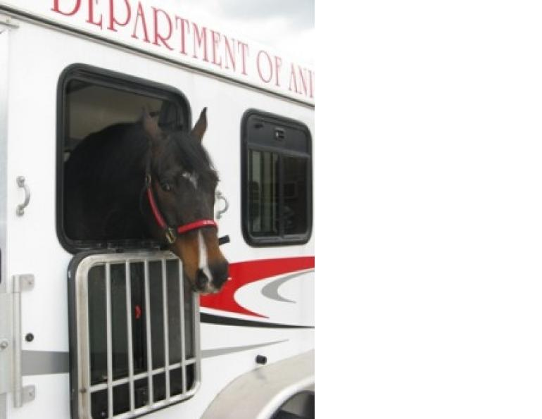 Successfully Transporting Horses with Fractures
