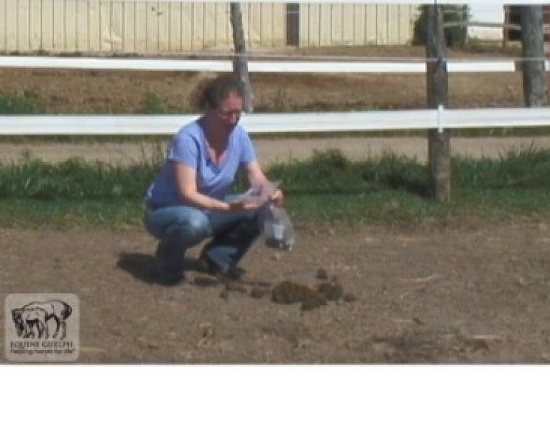 How to Collect Manure for a Fecal Egg Count