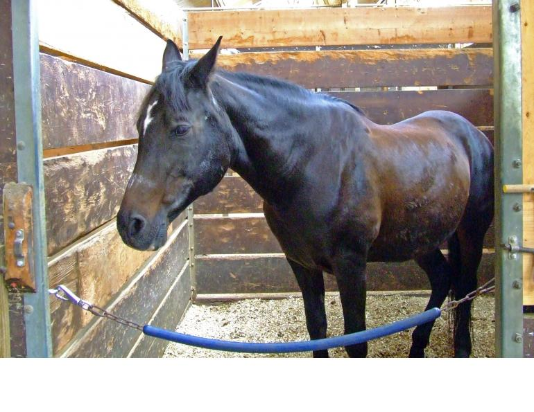 clinical signs of equine gastric ulcers, how to check horse for gastric ulcers