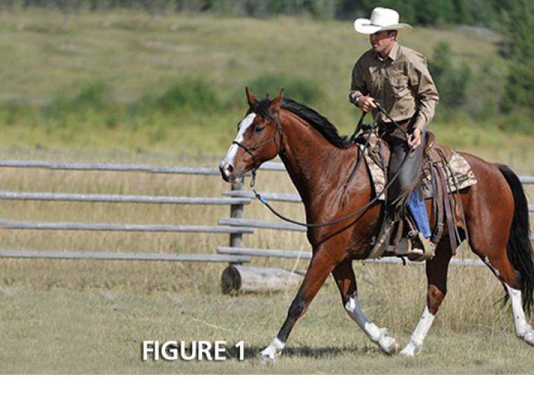 jonathan field, one rein riding, jonathan field, bridleless, halter riding, natural horsemanship, horse obstacle, bridleless canter, bridleless trot, bridleless walk