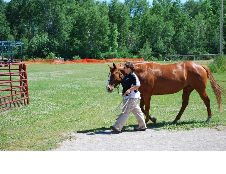 Pre-Saddle Training for the Young Horse