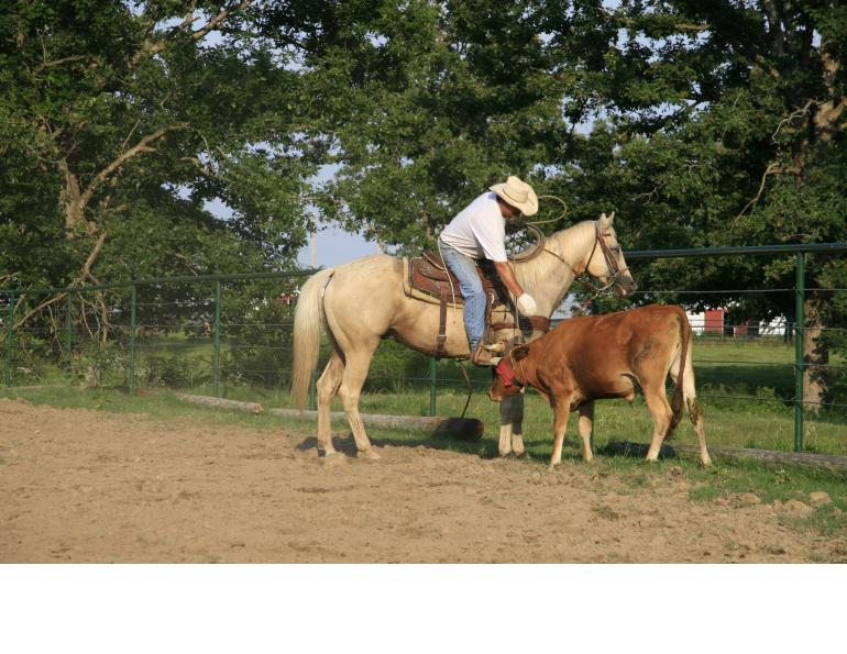 how to break a horse, how to school a horse, will clinging, how to create a bombproof horse