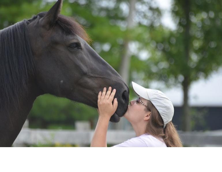 rescue horse, equine welfare, whispering hearts horse rescue, ospca, ontario standardbred adoption, osas, equine guelph, equine science