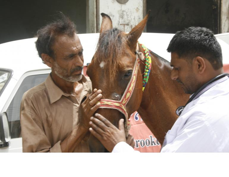 brooke hospital for animals, brooke animal hospital, helping donkeys in third world countries