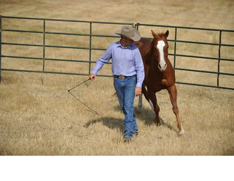 jonathan field, equine drive line, ground work horse, round pen exercises, art of liberty and training
