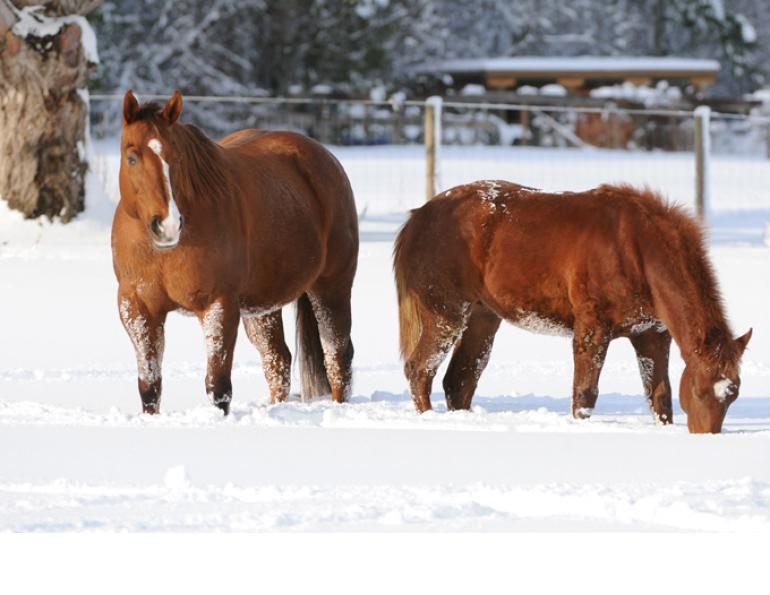 Body Scoring for Broodmares