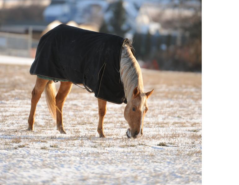 town n' country tack, horse blanket, horse clipping, horse hair, horse coat, horse grooming, horses in cold